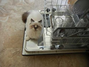 edward_dishwasher