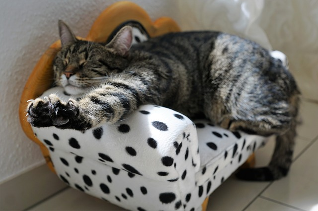 Picture of a cat relaxing on a tiny sofa.