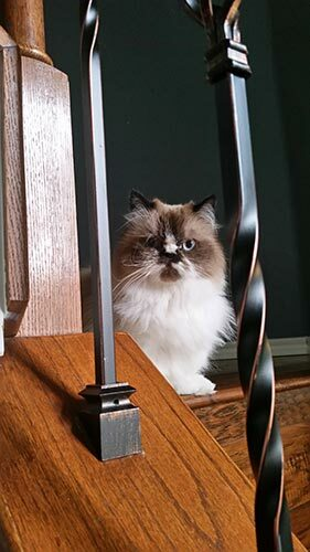 Picture of Edward the cat on the stairs